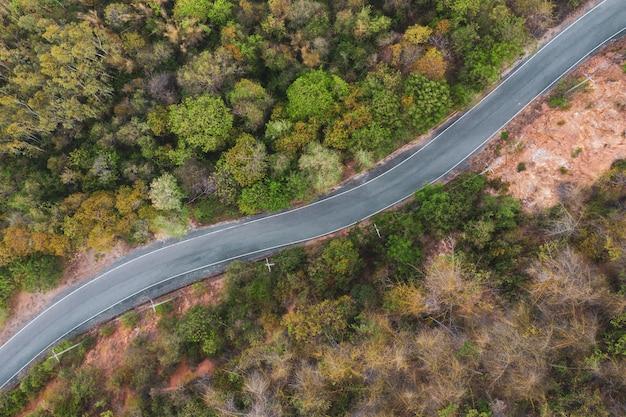 A parte superior aérea coloca para baixo a vista sobre o trajeto da forma da curva entre a floresta verde no verão.