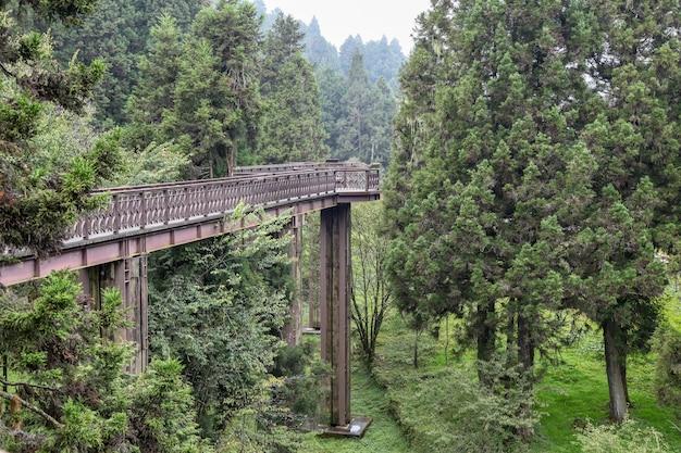A passagem de madeira do céu no parque nacional alishan em formosa.