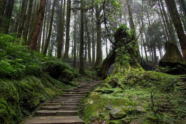 A passarela na floresta tem um belo ambiente em taiwan.