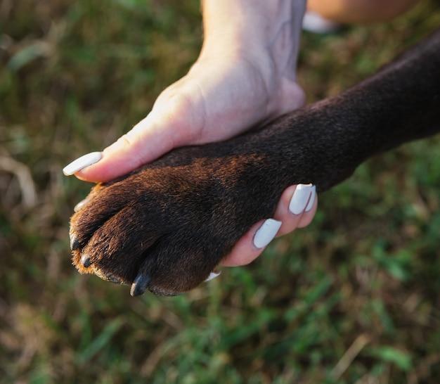 A pata de um cachorro na palma da mão de uma mulher. a pata da raça labrador é um close-up. o conceito de amizade e lealdade. um animal de estimação.