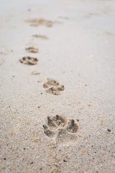 A pegada do cão andando na praia.