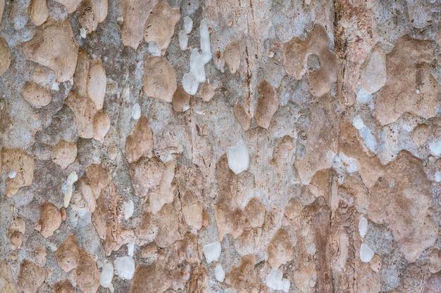 A pele das grandes árvores.