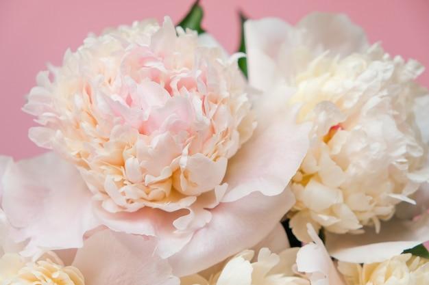 A peônia branca bonita floresce o close-up. vista do topo. lay plana