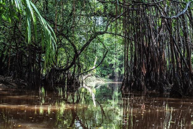 A pequena amazônia em pang-nga em sang nae canal tailândia