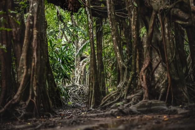 A pequena amazônia em pangnga em sang nae canal tailândia