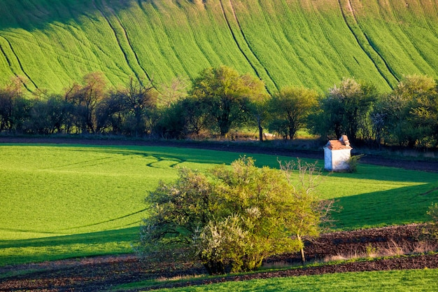 A pequena capela cercada por árvores e campos de trigo.