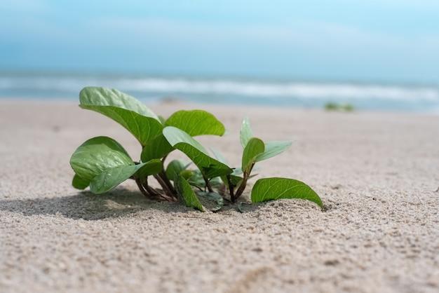 A pequena planta no fundo da praia, luz embaçada ao redor