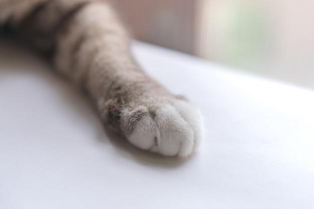 A perna direita do gato parece fofa.