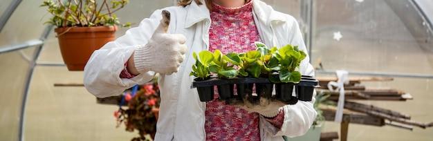A pessoa do banner de jardinagem segura as mudas e mostra o polegar no fundo da estufa não