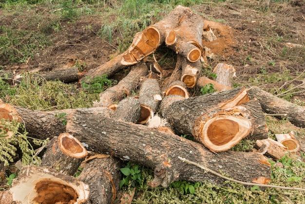 A pilha da árvore de chuva registra perto da floresta tropical.