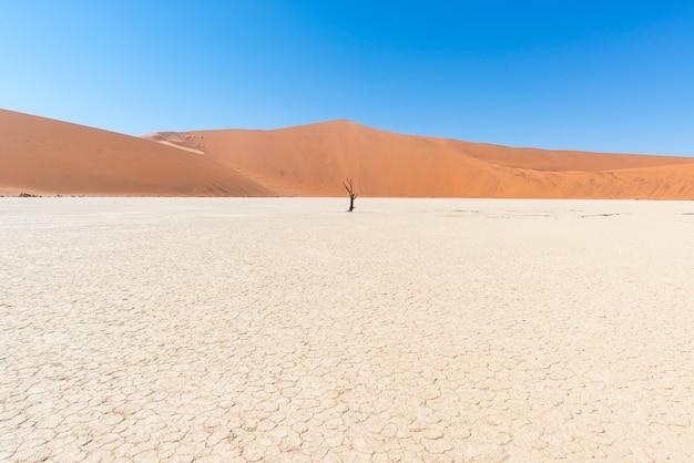 A pitoresca sossusvlei e deadvlei, argila e sal plano cercado por dunas de areia majestosas