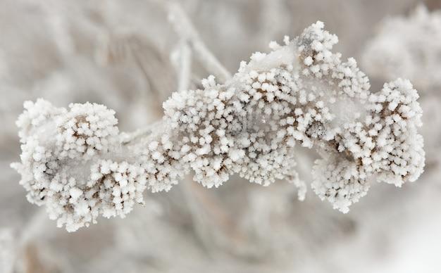 A planta está coberta de geada espessa. paisagem de inverno. Foto Premium