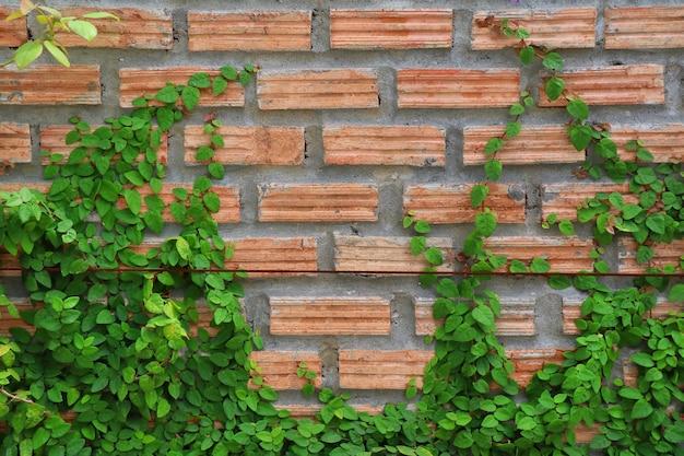 A planta na parede de tijolo vermelho. foco suave. conceito de plano de fundo.