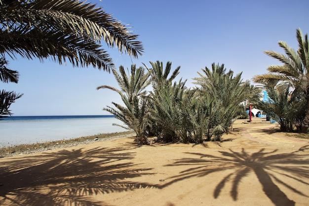 A praia do mar vermelho, arábia saudita