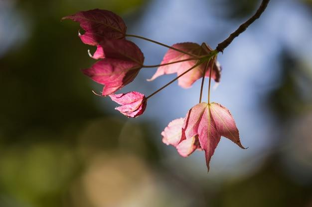 A primavera sai em um galho de árvore