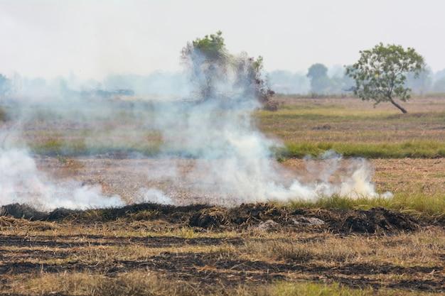 A queima de ervas daninhas nos campos é uma das causas da poluição da fumaça