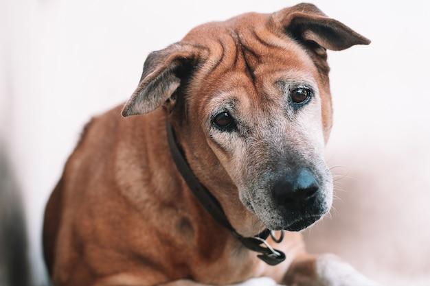 A questão do cão para olhar e pensar