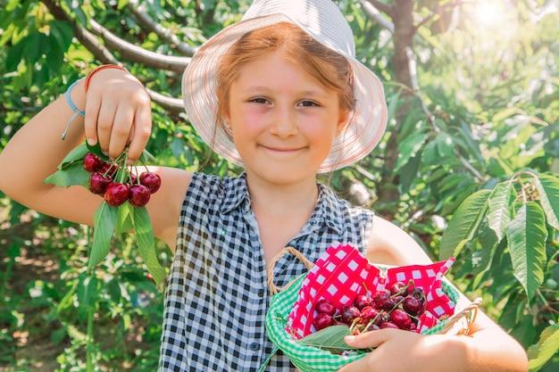 A rapariga está escolhendo a cereja em uma exploração agrícola da fruta. criança escolher cerejas no pomar de verão.