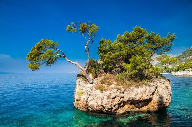 A rocha com pinheiros crescendo no mar, brela, makarska riviera, croácia