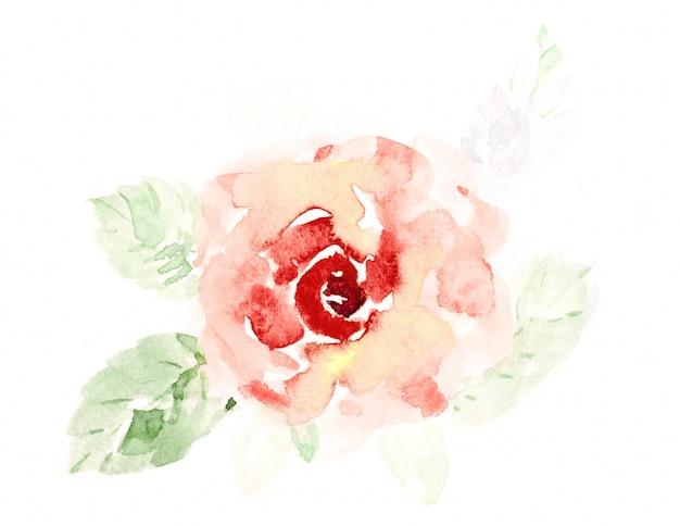 A rosa bonito da laranja floresce a aguarela pintado à mão no branco.