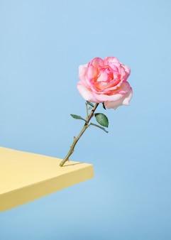 A rosa cai contra o fundo azul pastel na borda da mesa. dia dos namorados - feriado
