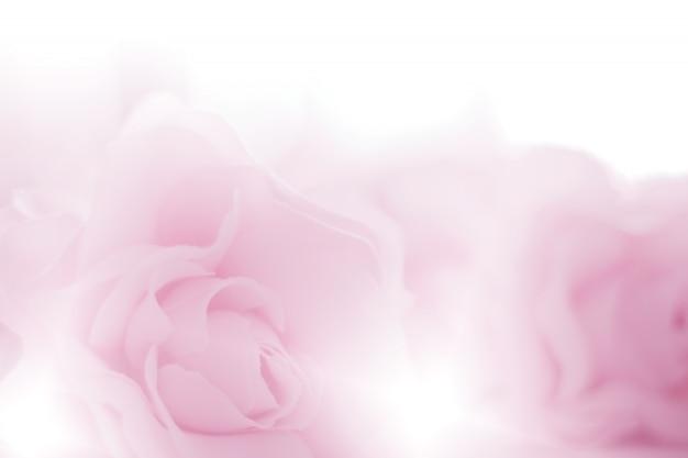 A rosa colorida floresce a tela feita com inclinação para o fundo.