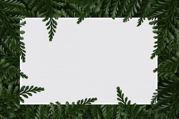 A samambaia do folheto da placa do livro branco isolou o fundo branco.