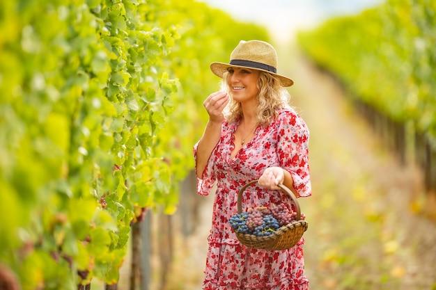 A senhora bonita segura uma cesta e prova uvas no vinhedo.