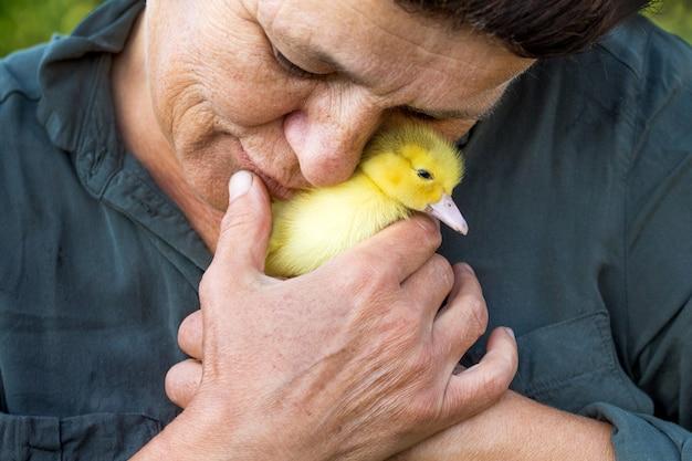 A senhora idosa trouxe um pequeno pato amarelo ao rosto. amor aos animais