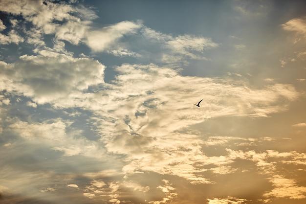 A silhueta de uma gaivota voando sobre o mar contra o azul e as nuvens do céu ao pôr do sol