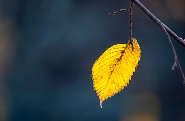 A solitária folha de outono na árvore