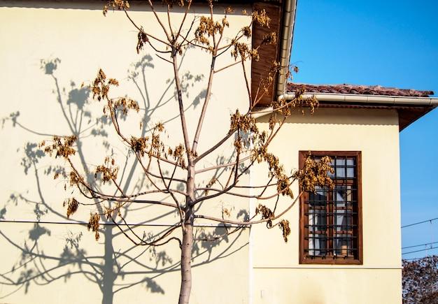 A sombra da árvore sobre a parede da casa.