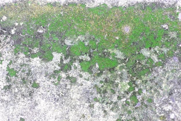 A superfície da velha laje de concreto coberta de musgo ou algas