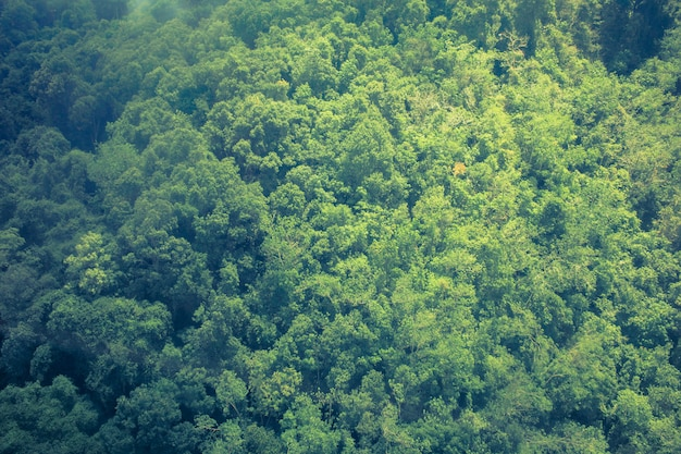 A superfície das árvores na floresta