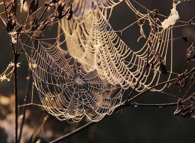 A teia de aranha com gotas de orvalho pendurado nos galhos