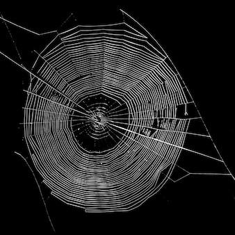 A teia de aranha tecida em um fundo preto é um local para publicidade Foto Premium