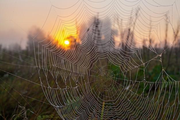 A teia de uma aranha o close up da teia de uma aranha ao ar livre na floresta Foto Premium