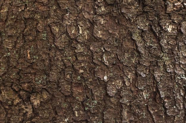 A textura da casca de árvore