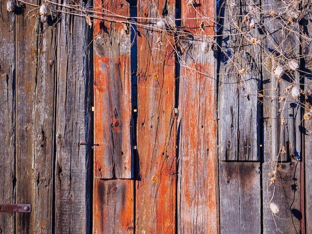 A textura da cerca velha com pepinos selvagens secos