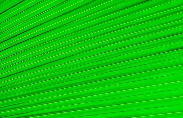 A textura da folha de palmeira a textura da folha de uma árvore tropical