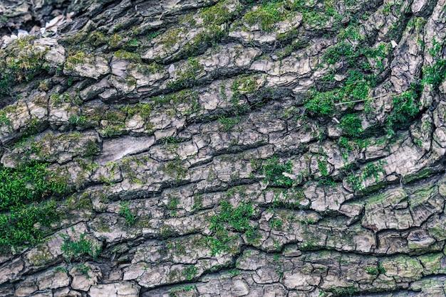 A textura da madeira coberta de musgo.