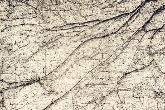 A textura da parede