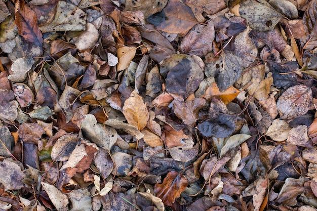 A textura das folhas secas no chão. conceito de outono