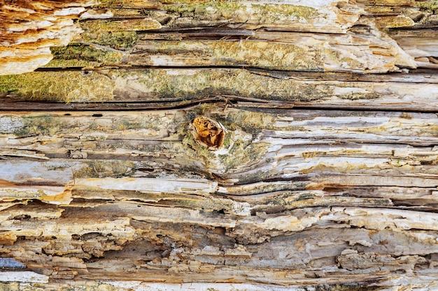 A textura de madeira velha com padrões naturais