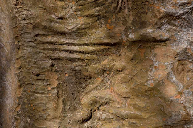 A textura de madeira velha marrom escura. casca de árvore, fundo de madeira. grande plano de textura de placa larga, banner panorâmico.