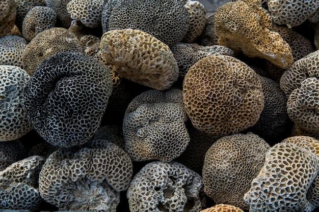A textura de uma antiga parede de pedra chinesa feita de pedras, corais e conchas