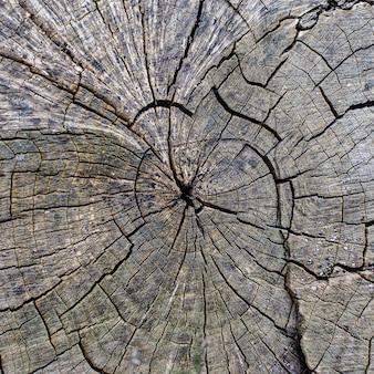 A textura de uma árvore rachada