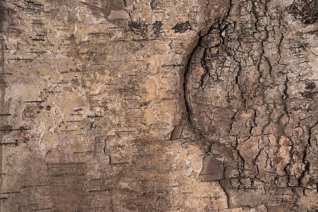 A textura de uma casca de árvore grossa em alta resolução