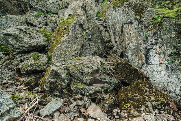 A textura detalhada da rocha com musgos e líquenes fecha-se acima.