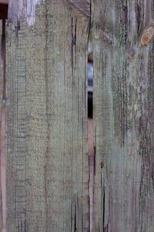 A textura do tempo da árvore destruída